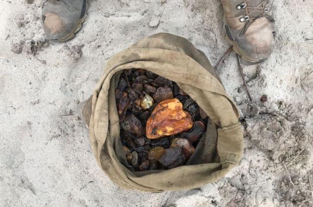 Под Зеленоградском поймали копателей с 6 кг незаконно добытого янтаря.