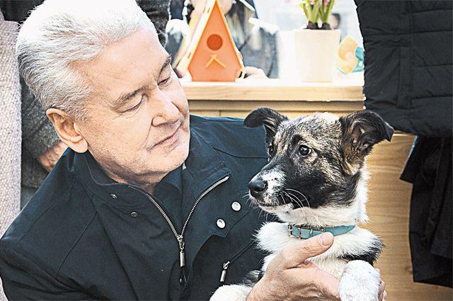 Мэр Собянин взял из приюта щенка по кличке Джоуи на площадке «Четвероногий друг» фестиваля «Пасхальный дар».