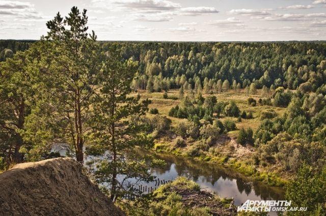 В Омской области уже не первый год незаконно вырубают леса.