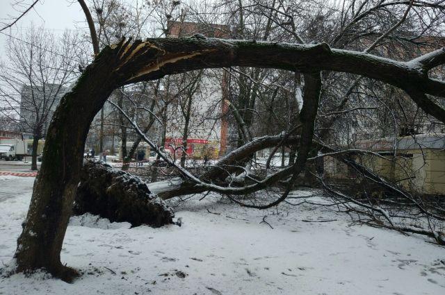 Управляющая компания вовремя не спилила сухое дерево.