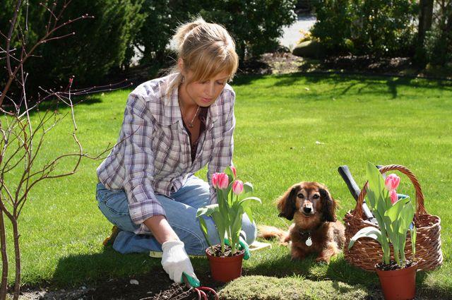Как сделать цветник в огороде фото
