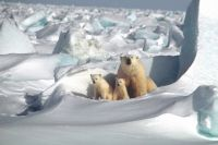 Бескрайние просторы Арктики завораживают.