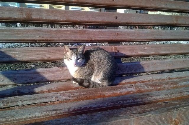 В ближайшие дни в Кузбасс придет теплая весенняя погода.