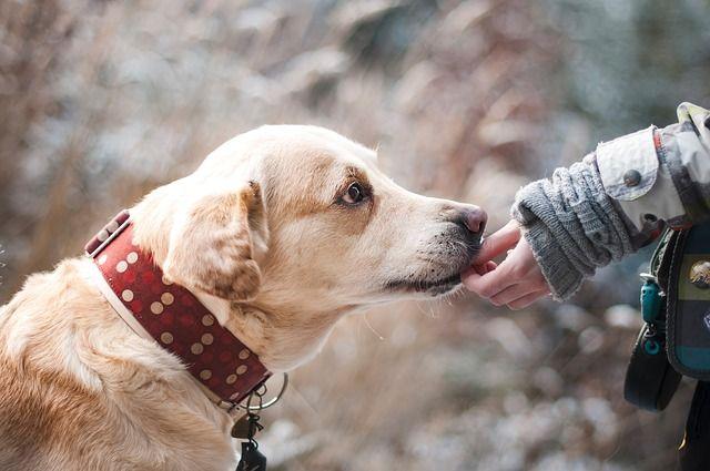 В Новокузнецке местный житель поджег свою собаку.