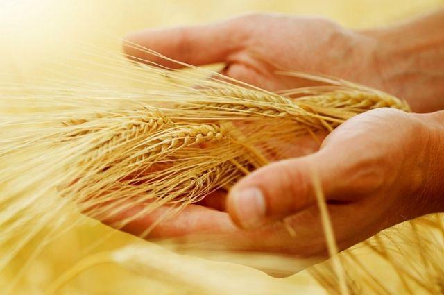 Россельхозбанк оказывает значительную поддержку агропрому