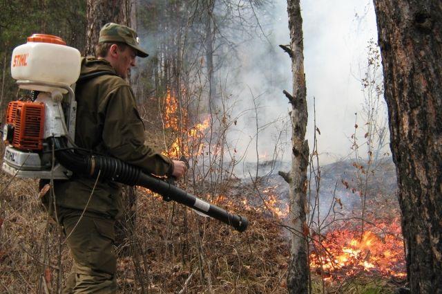 Из-за погибших пихт есть опасность лесного пожара.