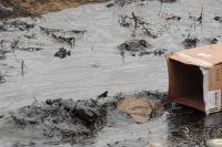 Амурский залив тонет в нефтяных пятнах.