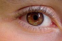 Шесть человек благодаря своевременному обследованию и выявлению глаукомы смогут начать лечение этого опасного недуга.