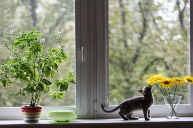 Качественное окно - комфортное жилье