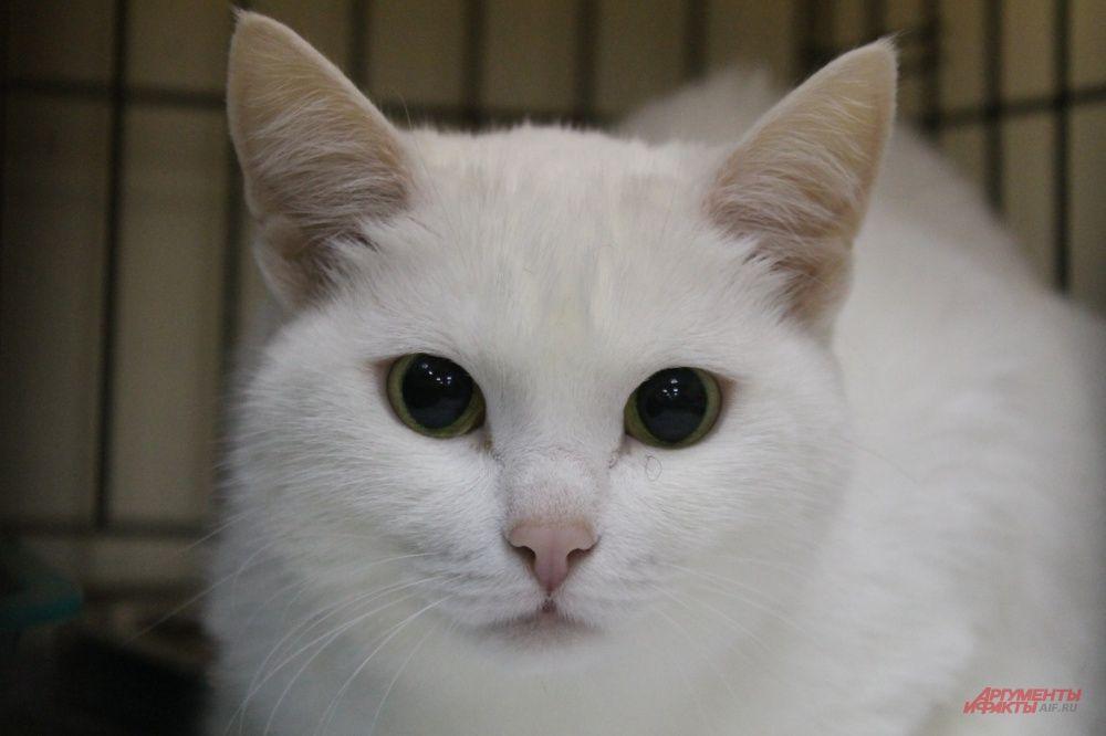 Кошки из приюта ухоженные, чистые