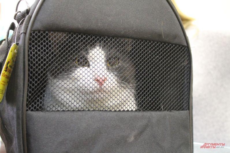 Этому коту повезло, он обрел новых хозяев