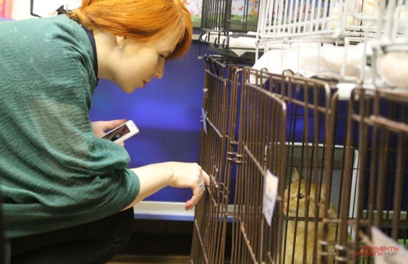 Гости выставки играют с животными и выбирают себе нового питомца