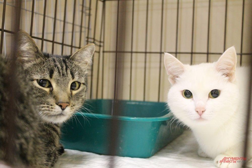 В клетках на выставке кошки сидят по двое