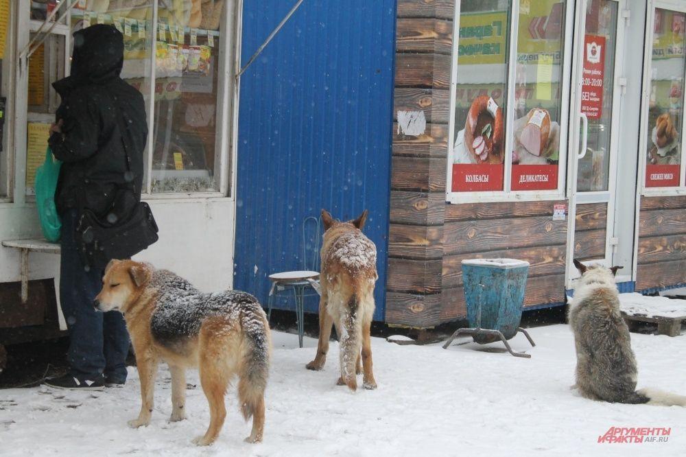 Собаки думают, что вновь началась зима и ждут, что пермяки их подкормят