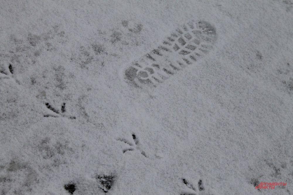 Следы на снегу.