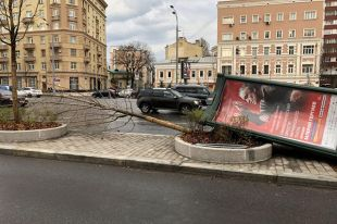 Ожидать ли повторения урагана в Москве?