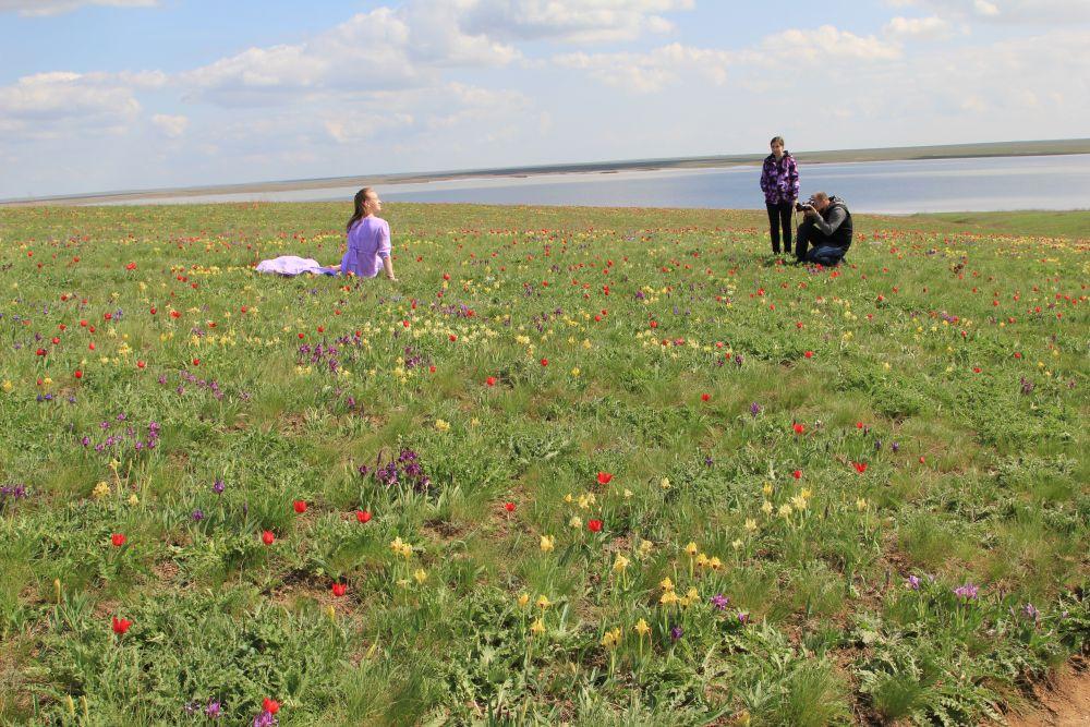 Цветение тюльпанов в заповеднике «Ростовский» стало туристической достопримечательностью Ростовской области.
