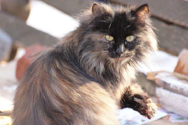 Животные все чаще становятся жертвами жестоких хозяев.