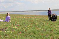 На цветение диких тюльпанов в Ростовскую область приезжают со всей России.