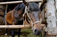 Одна лошадь убита собаками, другая - ранена.