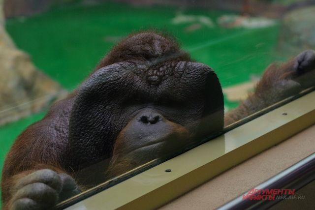 Евгений Козлов прочитал лекцию о переломах костей приматов