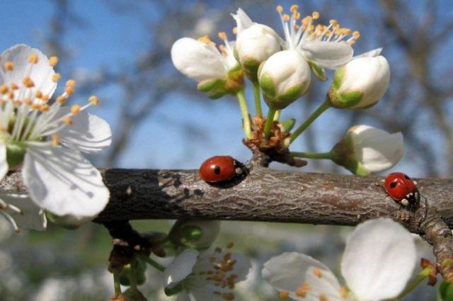 25 апреля: праздники, именины и что в этот день стоит делать