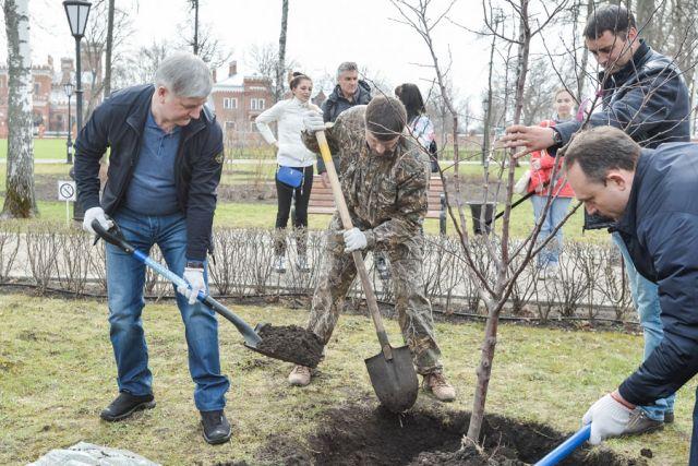 Александр Гусев сажал деревья на территории Верхнего парка дворца Ольденбургских.