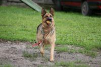 В Калининграде отказались от шествия с собаками в параде на 9 Мая.