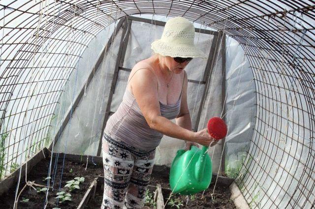 Покройте теплицы и парники плёнкой, сделайте временные укрытия из плёнки или укрывного материала и посейте туда семена холодостойких зелёных культур.