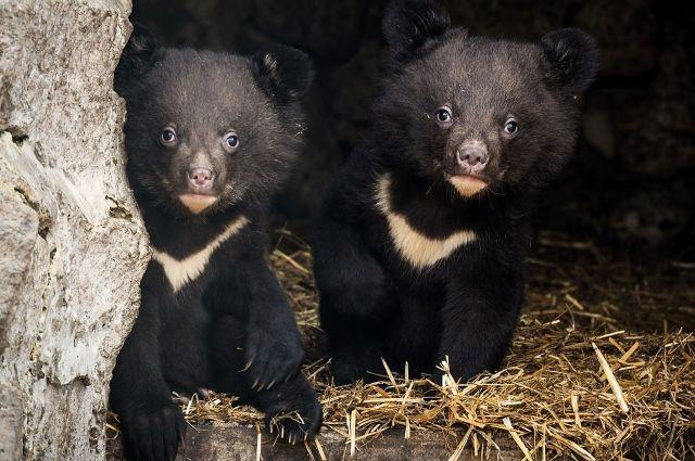Пока у медвежат нет имен.