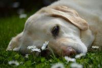 К прогулке по весенней траве следует подготовиться.