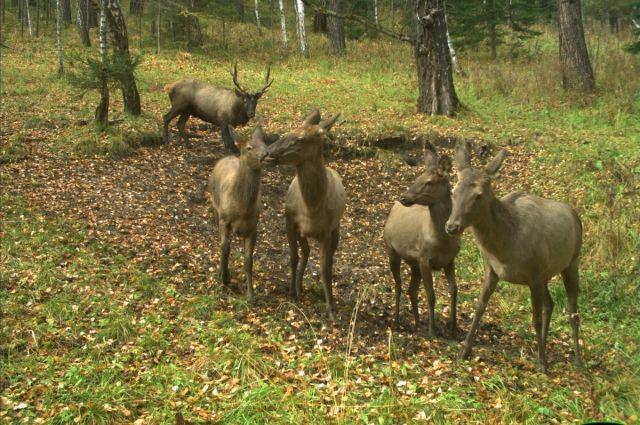 25 животных отправились в естественную среду заказника «Бюзинский».