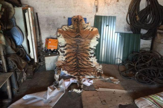 Шкуру редкого зверя превратили в настенный ковёр.