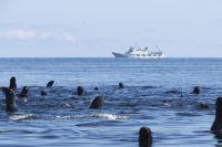 Волонтеры из Тюмени отправятся в экспедицию на Командорские острова