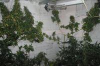 Согласно заключению экспертизы, изъятые растения являются наркосодержащими растениями конопли.