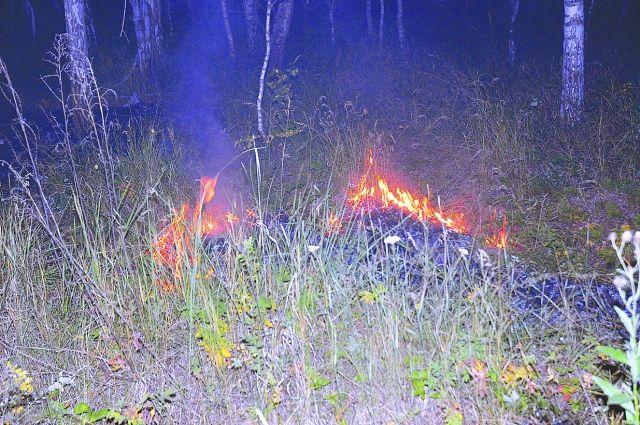 Неконтролируемый огонь перекидывается на деревья и дачные постройки