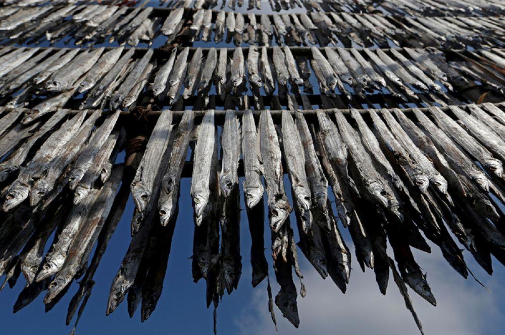 Сушка улова в рыбацкой деревушке в Мумбаи, Индия.
