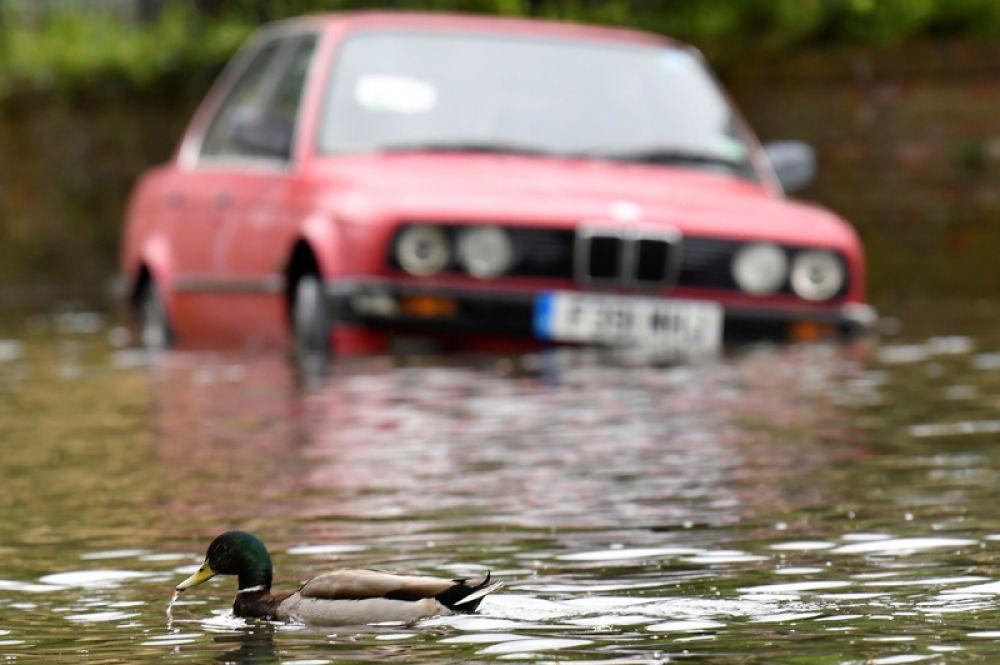 Утка проплывает мимо машины, припаркованной на затопленной улице, прилегающей к Темзе, после того, как река вышла из берегов после сильного дождя в Лондоне, Великобритания.