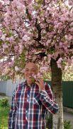 Однако, уже давно главным событием весны в Украине становится цветение сакур в Ужгороде. Здесь сакуры рассажены по всему городу и буквально влекут к себе туристов. На фото - губернатор Закарпатской области Геннадий Москаль.