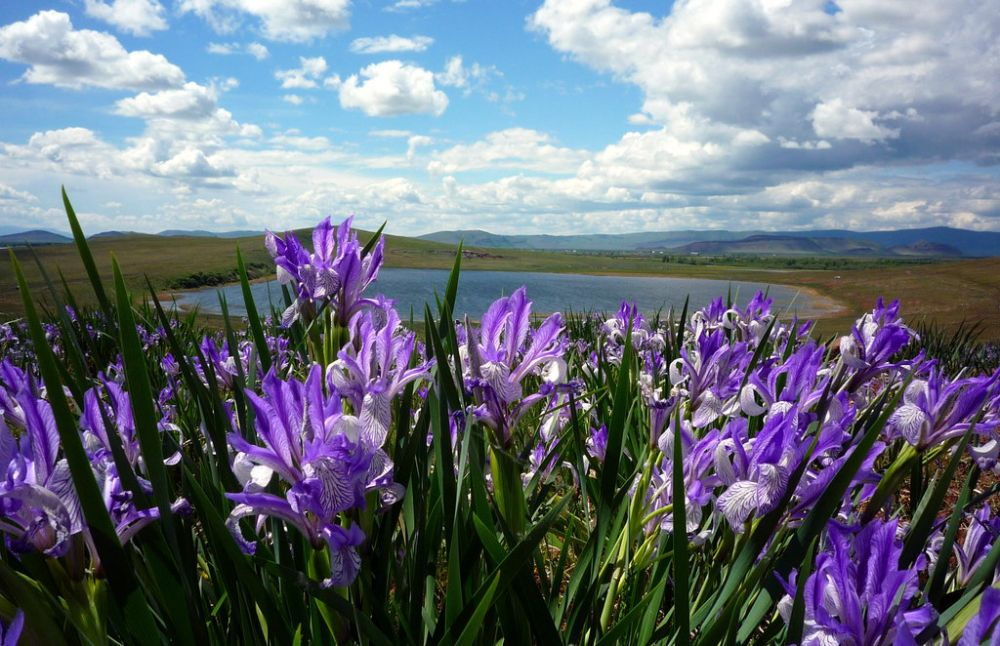 Кстати, еще чуть дальше, в той же Херсонской области есть Олешковские пески. Будучи само по себе памятником природы, здесь весной также есть на что посмотреть - в мае тут зацветают ирисы.