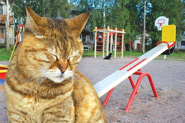 В России до сих пор нет федерального закона об ответственном обращении с животными.