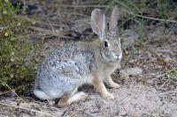 Зайца подлечили в ветклинике.