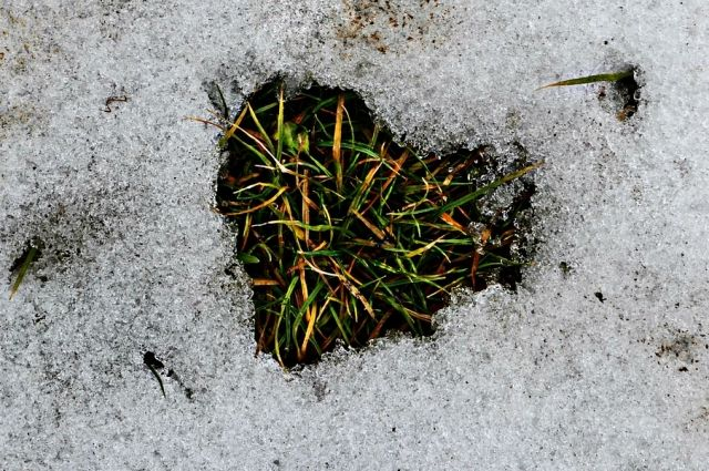 Неожиданно: вОмске прошел майский снегопад