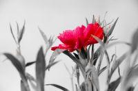«Красная гвоздика» – всенародный символ памяти о погибших героях и помощи живущих ныне.