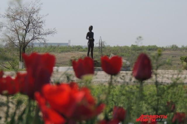 На Солдатском поле в мае зацвели тюльпаны.