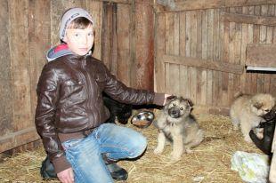 Зуфар Сулейманов организовал приют для бездомных щенков.