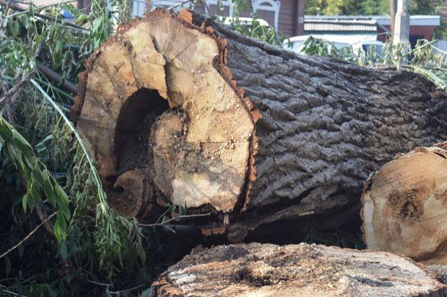 Вырубка деревьев в Барнауле