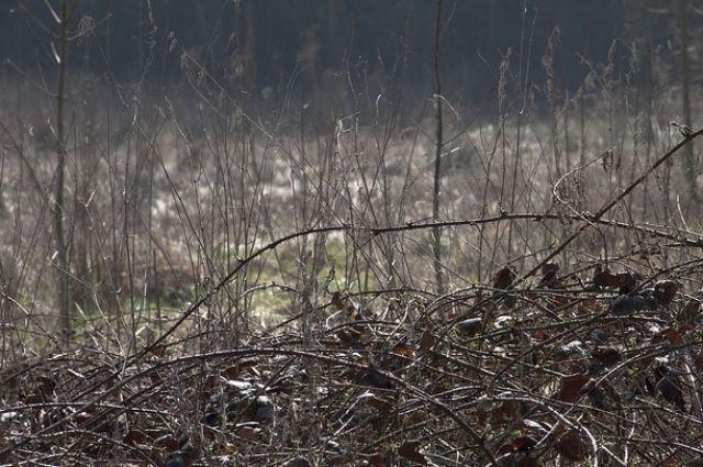 Заодно в лесу уберут и свалки мусора и строительно-бытовых отходов.