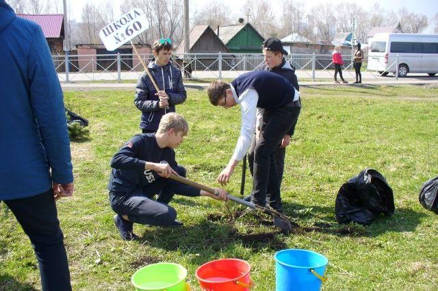 К 100-летнему юбилею Кемерова юные экологи высадили 100 сосен.