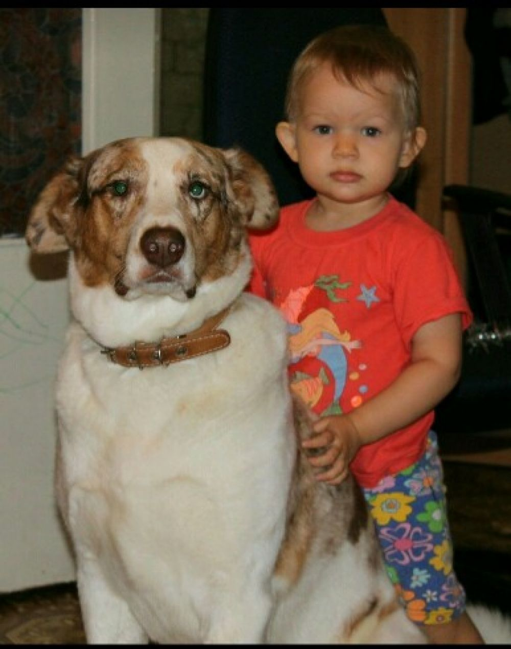 Рекс и ребёнок
